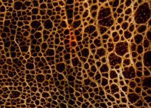 Leather Texture-10